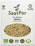 Weizen BIO Keimsprossen von SaatPur - Keimsaat für Sprossen - 75g