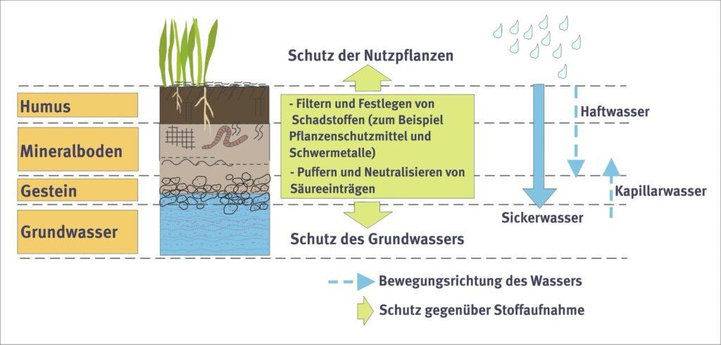 Böden filtern und neutralisieren allerhand Schadstoffe. Davon profitieren Mensch und Umwelt.