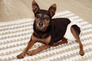 CBD-Öl für Hunde mit Arthrose