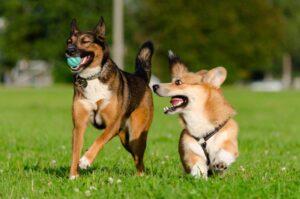 Erfahrungen mit CBD-Öl für Hunde