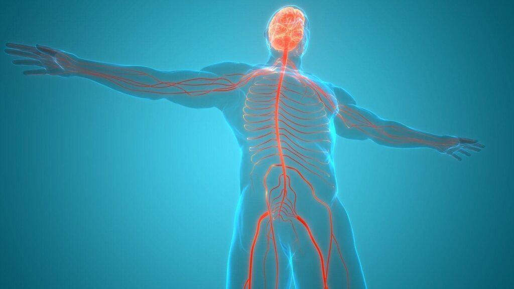 gz endocannabinoidsystem 370831774