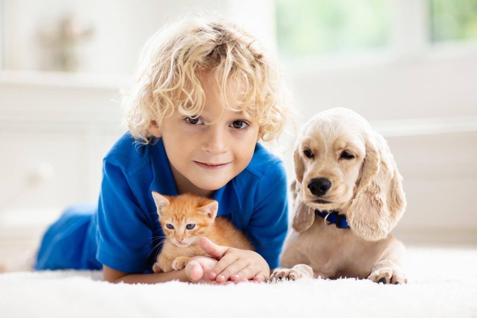 Haustier Für Allergiker